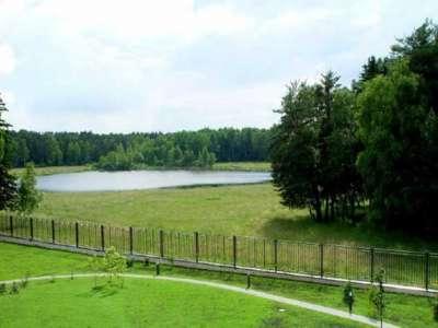 Посёлок У лесного озера, Лес: Лес по границе участка